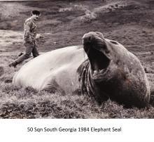 50 Sqn South Georgia 1984 Elephant Seal